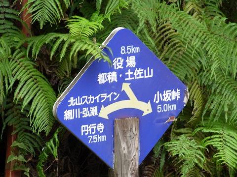a-yuzuRIMG5577.jpg