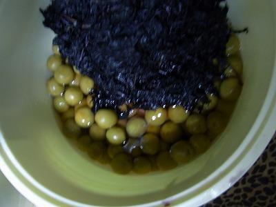 aaaabfo-yuzuRIMG3055.jpg