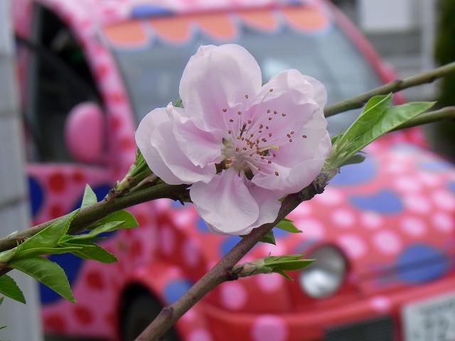 k-yuzuRIMG1760.jpg