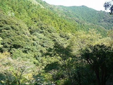 s-yuzuP1040491.jpg