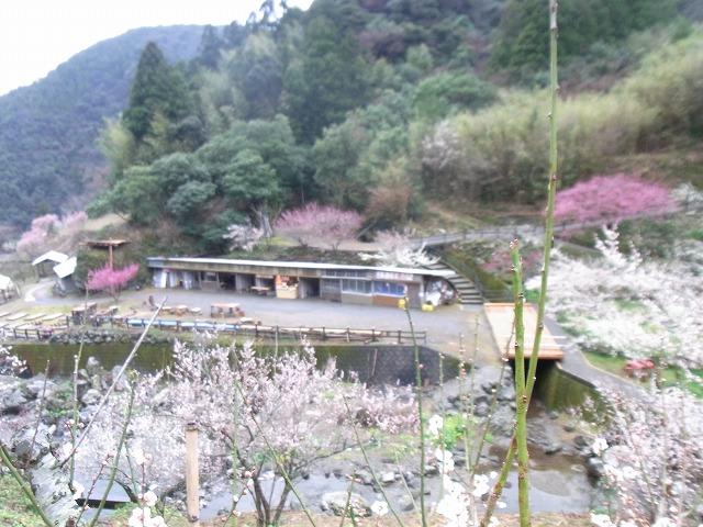 ssa-yuzuRIMG1342.jpg