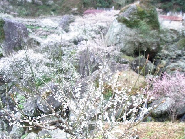 ssa-yuzuRIMG1370.jpg
