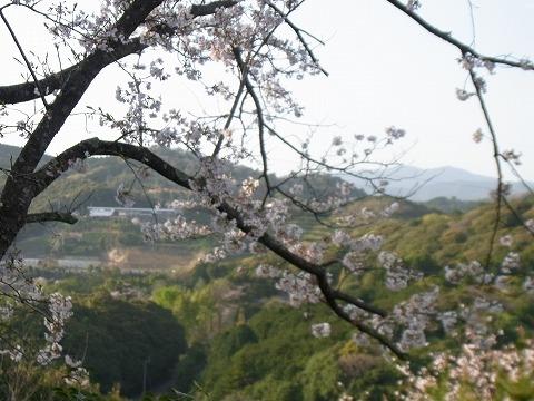 ww-yuzuRIMG1656.jpg