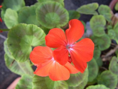 za-yuzuRIMG3769.jpg