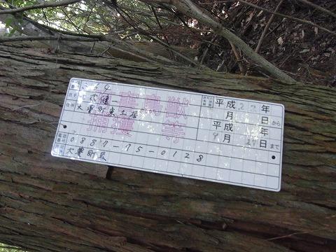 zaa-yuzuRIMG3794.jpg