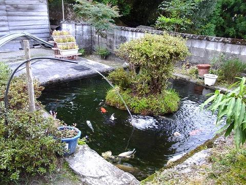 zwww-yuzuRIMG5945.jpg